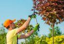 Wanneer moeten bomen gesnoeid worden?