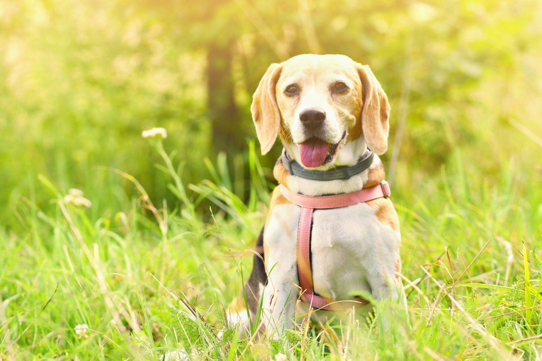 Hond Vriendelijke Tuin : Is uw tuin hondvriendelijk? gft.be