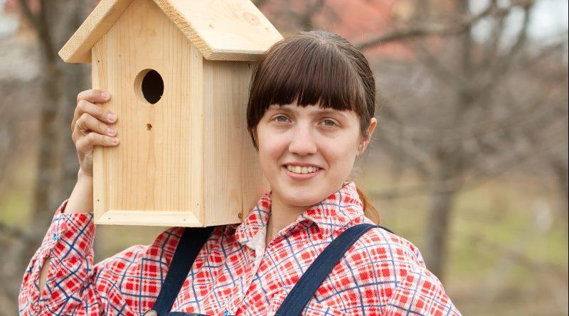 hoe bouw ik een vogelhuisje